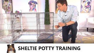 Sheltie Potty Training from WorldFamous Dog Trainer Zak George  Potty Train a Shetland Sheepdog