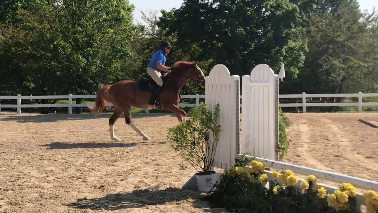 J'Adore schooling with Chad