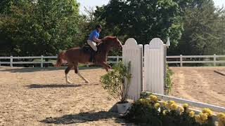 J'Adore schooling with Beginner adult