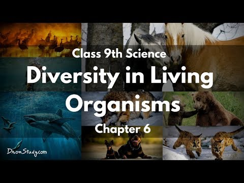Diversity in Living Organisms : CBSE Class 9 IX Science In E
