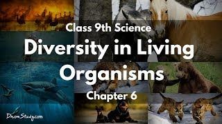Diversity in Living Organisms : CBSE Class 9 IX Science In English
