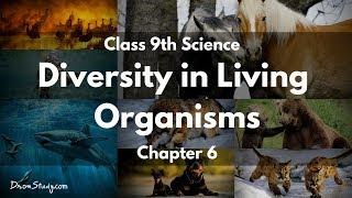 Diversity in Living Organisms CBSE Class 9 IX Science In English