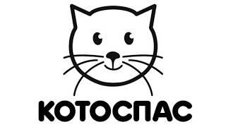 Зимний Котоспас: домик для кошек своими руками (как сделать и где поставить)