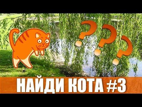 Игра Найди кота Вконтакте.