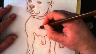 How to draw a (Staffordshire) bull terrier dog