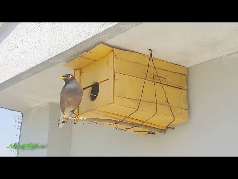 diy-birdhouse-homemade---how-to-build-a-bird-house-at-home---myna-bird-nest-box