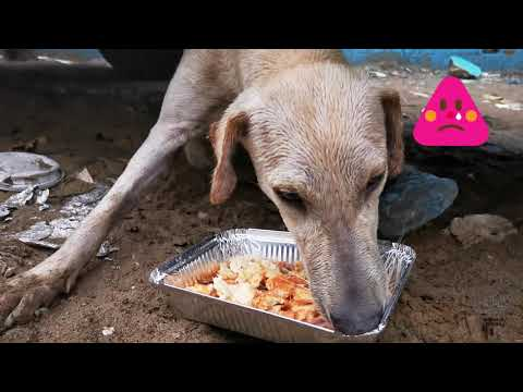 Rescue a hungry abondoned Dog in Dubai | She needs a owner