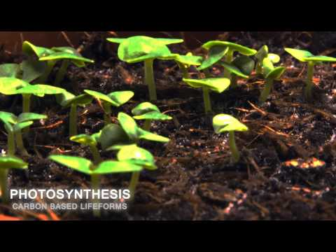 Carbon Based Lifeforms - Photosynthesis (World of Sleepers)