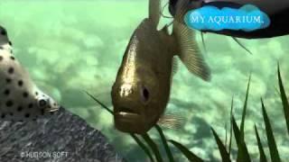 My Aquarium - My Yellow Piranha