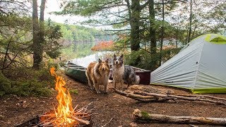Spring Camping Trip - My Dogs VS Mosquitoes