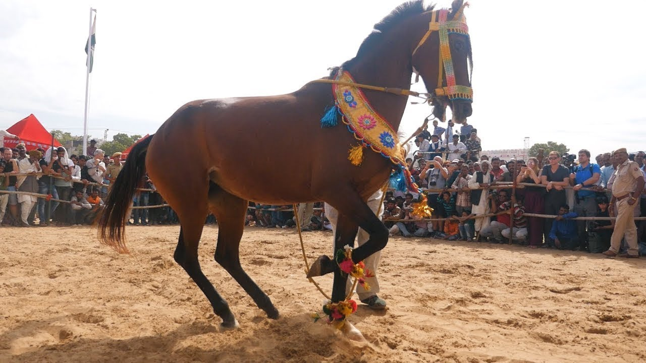 Karimugan | New Release Hindi Dubbed Full Action Movie Full HD 1080p | latest dubbed Movie