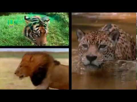 Самые опасные животные. Центральная Америка