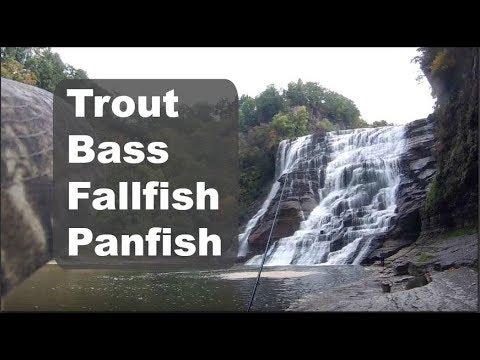 Multi-species WATERFALL FISHING! (Ithaca, NY)