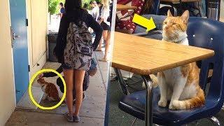 Was diese Katze jeden Tag macht, ist kaum zu glauben...