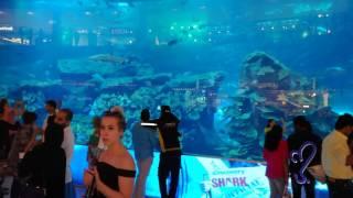 Dubai Aquarium | largest aquarium in the world.