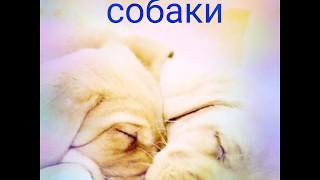 Мы любим домашних животных!