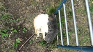 Кот сидит на кошке ()_()