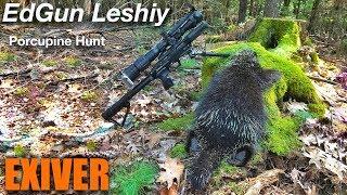 Edgun Leshiy Porcupine hunt