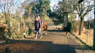 ცხენები სამეგრელოში - რეზი ჟორჟიკაშვილი, ნიკოლოზ კაჭარავა