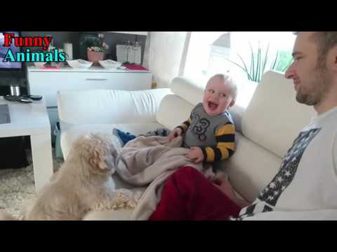 Shih Tzu Dog makes Baby laugh very happy – Dog Loves Baby Videos