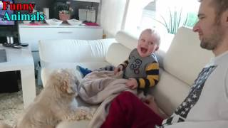 Shih Tzu Dog makes Baby laugh very happy - Dog Loves Baby Videos