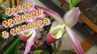 Обзор орхидей в домашних условиях