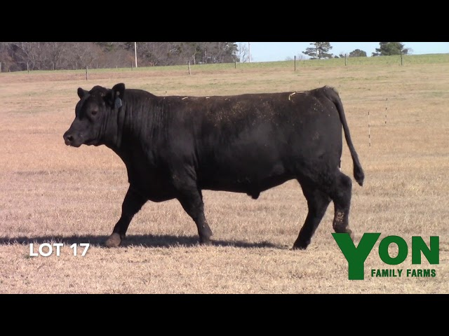 Yon Family Farms Lot 17