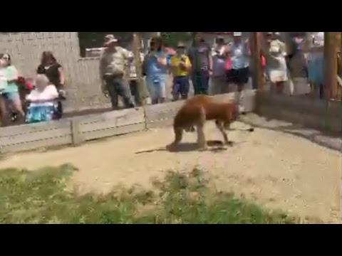 Animal Adventures with Jordan: Red Kangaroo