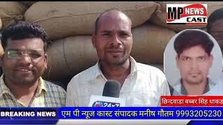 MPNEWSCAST चांद मंडी में बढ़ी मक्के की आवक  किसानों को मिल रहा उचित दाम