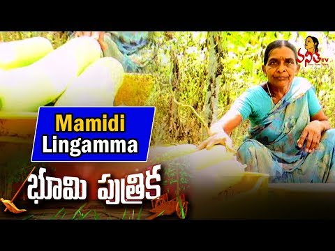 Woman Farmer Mamidi lingamma Success Story - Agriculture Spe