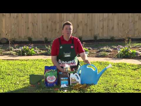 How To Fertilise Your Lawn - DIY At Bunnings