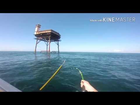 Mahi, Amberjack, And Cobia Fishing Offshore Of Hatteras North Carolina
