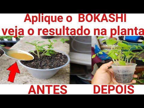 Aplique o BOKASHI na sua planta. Veja o resultado!!!