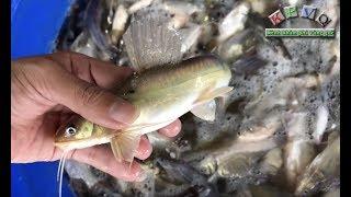 Chợ cá đồng Trường Xuân tấp nập mùa nước nổi - Khám phá vùng quê