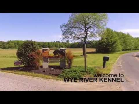 Wye River Kennel Of Queenstown Maryland Facility Tour