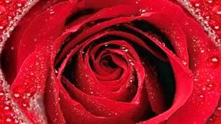 002 - Soorah Al-Baqarah - recited by 'Abdullaahi Abba Zaria
