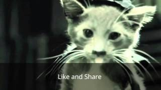 Download Video Lucu Konyol Kucing Star Wars www stafaband co