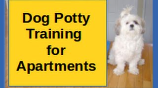 Dog Potty Training For Apartments