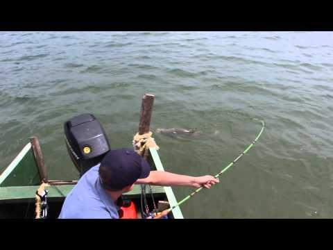 30KG Nile Perch caught on Lake Victoria - Bulago Island, Uganda