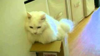ぢょん君は 箱が好き http://blog.goo.ne.jp/pittu1208 http://www.sky-...