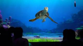 Turtle Talk with Crush in Seas Pavilion in Ep...