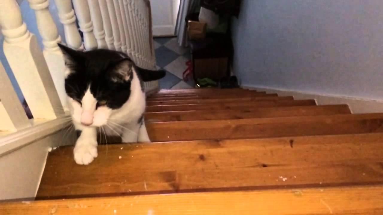 Youtube Zero Gravity Cats