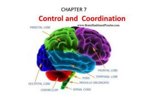 Cbse Class 10th Biology Control And Coordination Part 3 Hindi