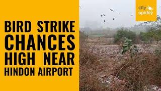 Birds near dumping spot pose threat to fighter planes