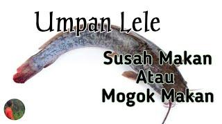 Racikan Umpan Ikan Lele Harian Susah Makan Atau Mogok Makan Bait Cathfish Youtube