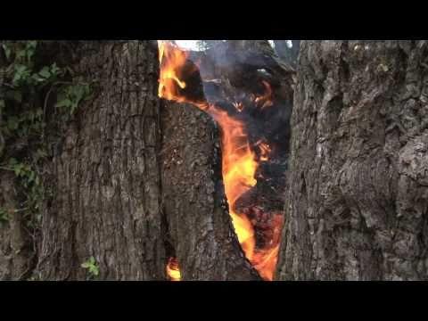 Curar Castaños con Fuego