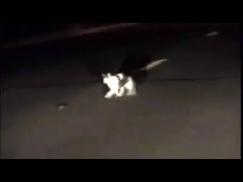 Thumbnail: Police Officer Catches Real-Life Cat And Mouse Chase On Dash Cam