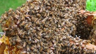 I removed thousands of bees from a birdhouse -- and didn
