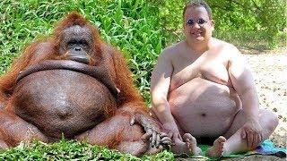 Приколы с обезьянами - Смешные обезьяны. ТОП. Jokes with monkeys
