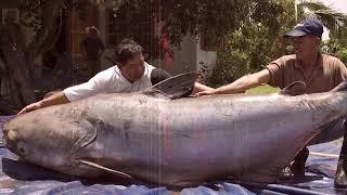 15 Biggest Fish Ever Caught